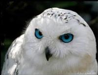 SnowOwl010101's Photo