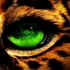 Jaguar--Lord's Photo